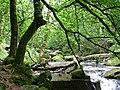 Golitha Falls - geograph.org.uk - 93009.jpg