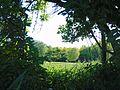 Grüner Durchblick.jpg