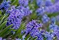 Gradina Botanica (8703524992).jpg