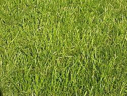 Grass-JW.jpg