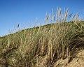 Grasses at Hope Beach, Tas.jpg