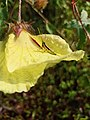 Grasshopper on a flower.jpg