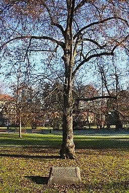 Graz Stadtpark Kernstock-Linde 01