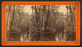 Great Cypress Gates, Oklawaha River, Fla, from Robert N. Dennis collection of stereoscopic views.png