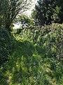 Green lane at Tor View - geograph.org.uk - 429415.jpg