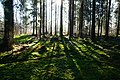 Hajnówka, Poland - panoramio (97).jpg