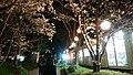 Hanami-jaya night 1.jpg