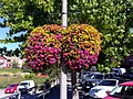 Hanging flowers, Fairhaven District, Bellingham, Sept. 2017 (36857380970).jpg