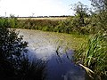 Havannah pond - geograph.org.uk - 47963.jpg