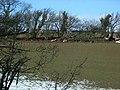 Hedge and sheep - geograph.org.uk - 340252.jpg