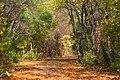 Herbststimmung im Donaufeld.jpg