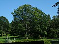 High tree, High Park - panoramio.jpg