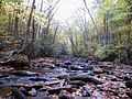 Hills-Creek-in-Spring ForestWander.JPG