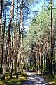 Hishyn Kovelskyi Volynska-Pryrichnyi nature reserve-view from the forest road-1.jpg