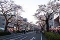 Hitachi Sakura Festival, Ibaraki 13.jpg