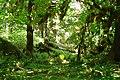 Hoh Rain Forest - panoramio.jpg