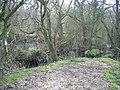 Hoofield Covert - geograph.org.uk - 386584.jpg