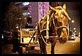 Horse-drawn carriage selling fruits, Beijing.jpg