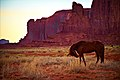 Horse in Monument Valley.jpg