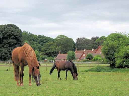 Horses on the fields at Home Farm, Tring - geograph.org.uk - 1502475