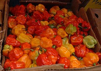"British African-Caribbean people - Scotch bonnet peppers imported from the Caribbean on sale at London's Brixton Market. The peppers are a key ingredient of ""Jerk"" dishes."