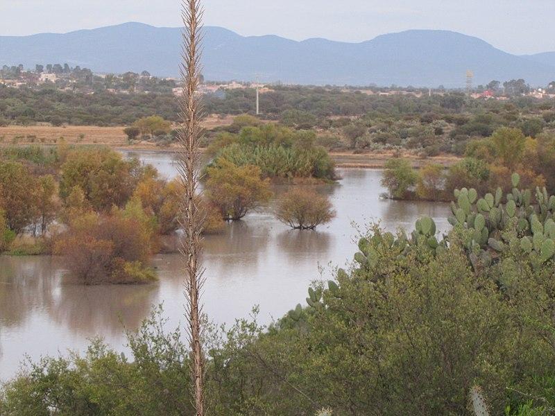 File humedal presa las colonias jard n bot nico el charco for Jardin botanico san felipe