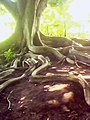 IMGOO44A Parque Castro Alves.jpg