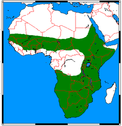 Ictonyx striatus range map.png