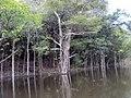 Igapó ilha do Severino Urucurituba Amazonas - panoramio (4).jpg