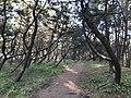 Imazu Pine Grove 11.jpg