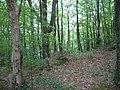 In the woods above Bontddu - geograph.org.uk - 2472613.jpg