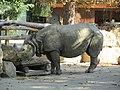 Indian Rhinoceros at Vienna Zoo (6363281153).jpg
