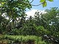 Indonesia (New Guinea Island)(35).jpg