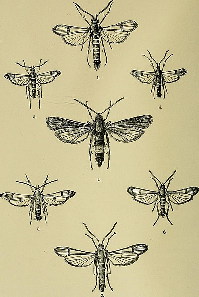 File:Insects and insecticides. A practical manual concerning noxious insects and the methods of preventing their injuries (1891) (14797669773).jpg