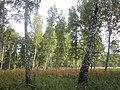 Iskitimsky District, Novosibirsk Oblast, Russia - panoramio (10).jpg