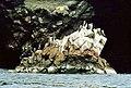 Islas Ballestas 1981 04.jpg