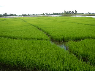 Agriculture in the Philippines