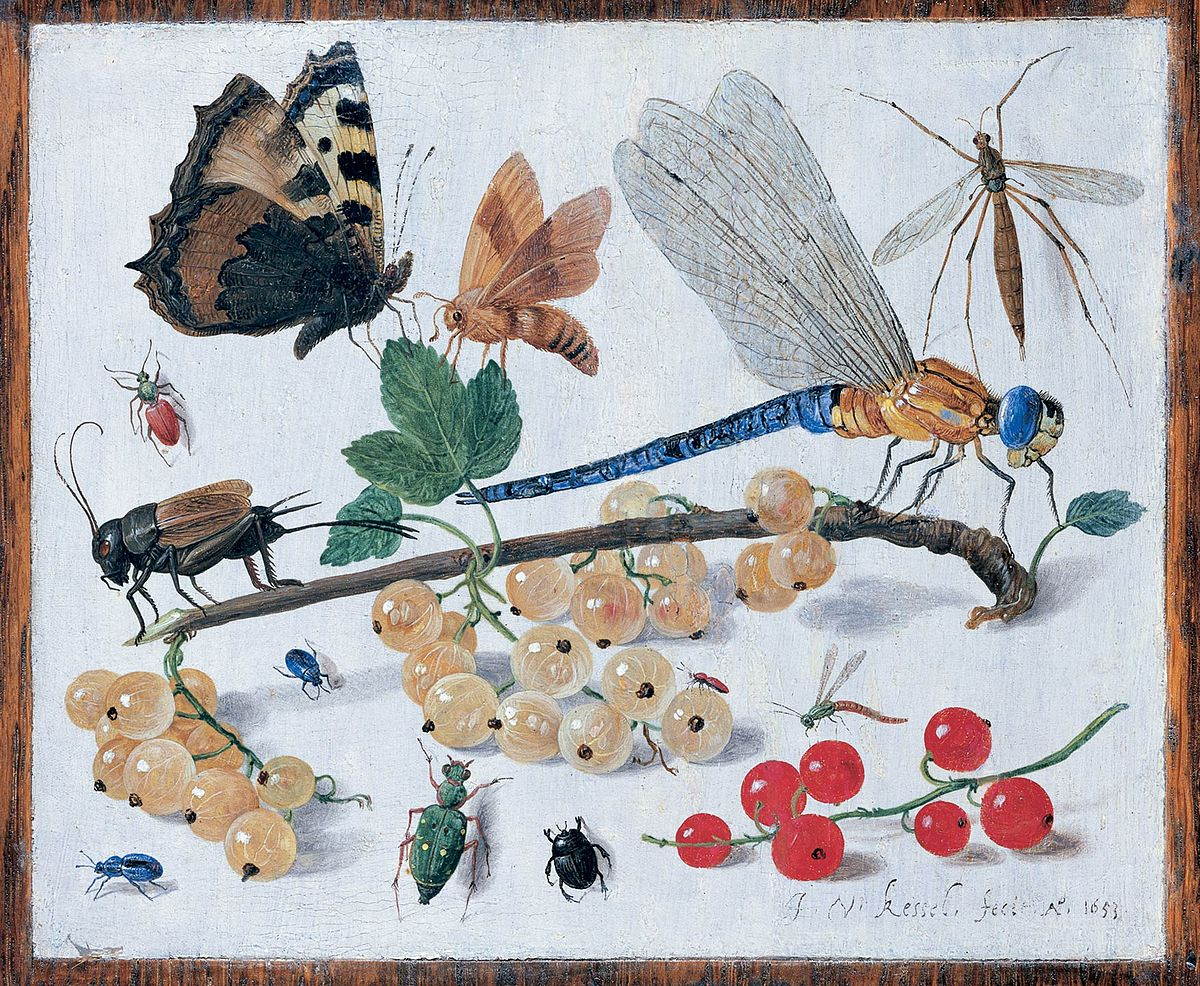 Suomen Hyönteiset