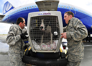 Japanese reaction to Fukushima Daiichi nuclear disaster - U.S. military dependent-family dog is unloaded off an evacuation flight from Japan