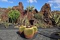 Jardín de Cactus - Guatiza - Lanzarote 02.JPG