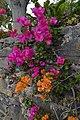 Jardim Botânico da Madeira DSC 0220 (14513358610).jpg