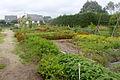 Jardin Ile aux idées IleTudy106.JPG