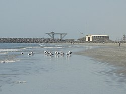 Jask پرندگان دریایی- بندر جاسک - panoramio.jpg