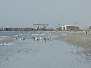 Jask - Image: Jask پرندگان دریایی بندر جاسک panoramio