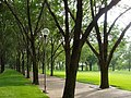Jefferson National Expansion Memorial grounds - Dan Kiley landscape designer.JPG
