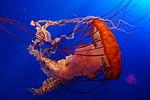 В получении новых генмодифицированных видов были использованы фрагменты ДНК медуз.