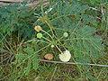 Joseph island plant white flower.jpg