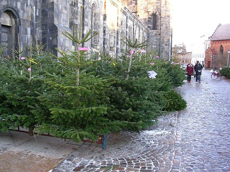 Fichier:Julgransförsäljning utanför Lunds domkyrka.jpg