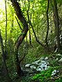 Jungle, Lazarev Kanjon 2.jpg