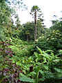 Jungle - The Lost Gardens of Heligan (9757530081).jpg